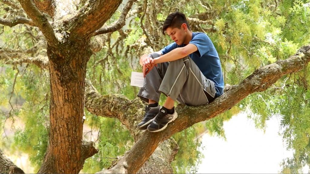 Danny in Tree