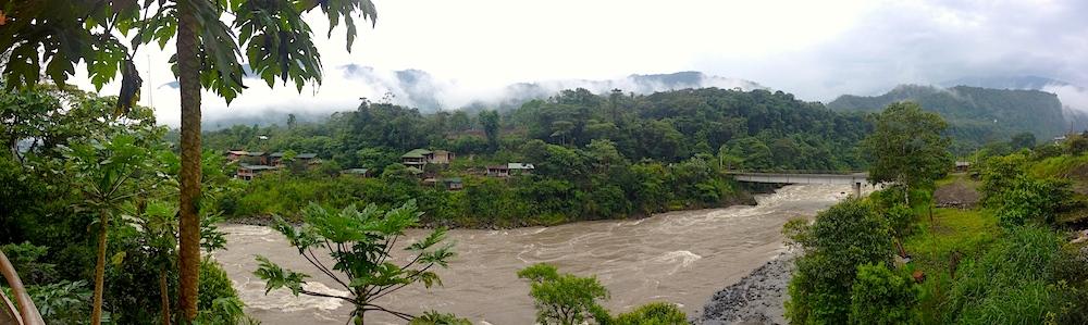jungle panorama